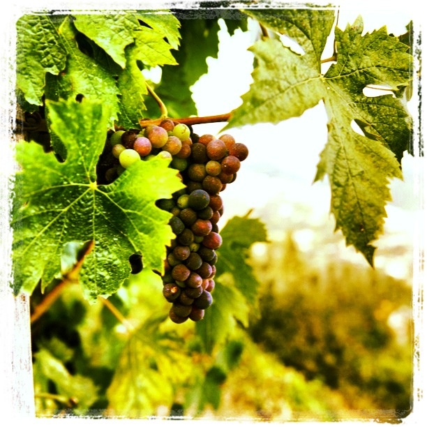 Wine to be